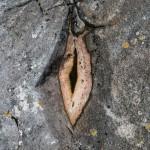 Huisnis Rocks I