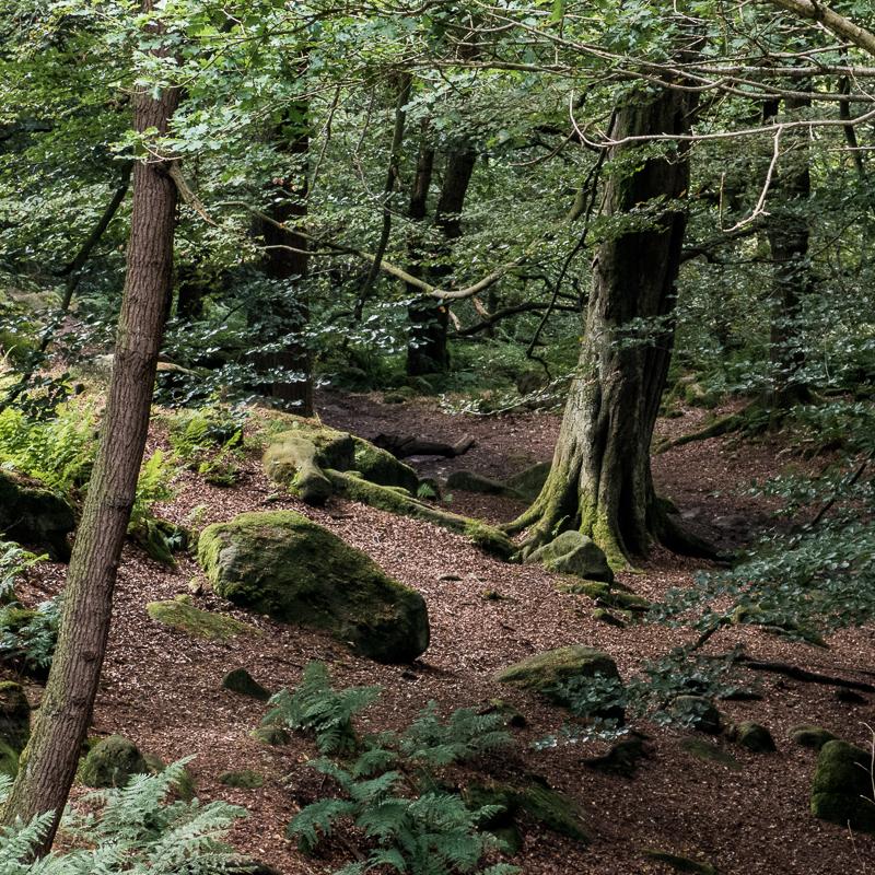 Padley Gorge Light