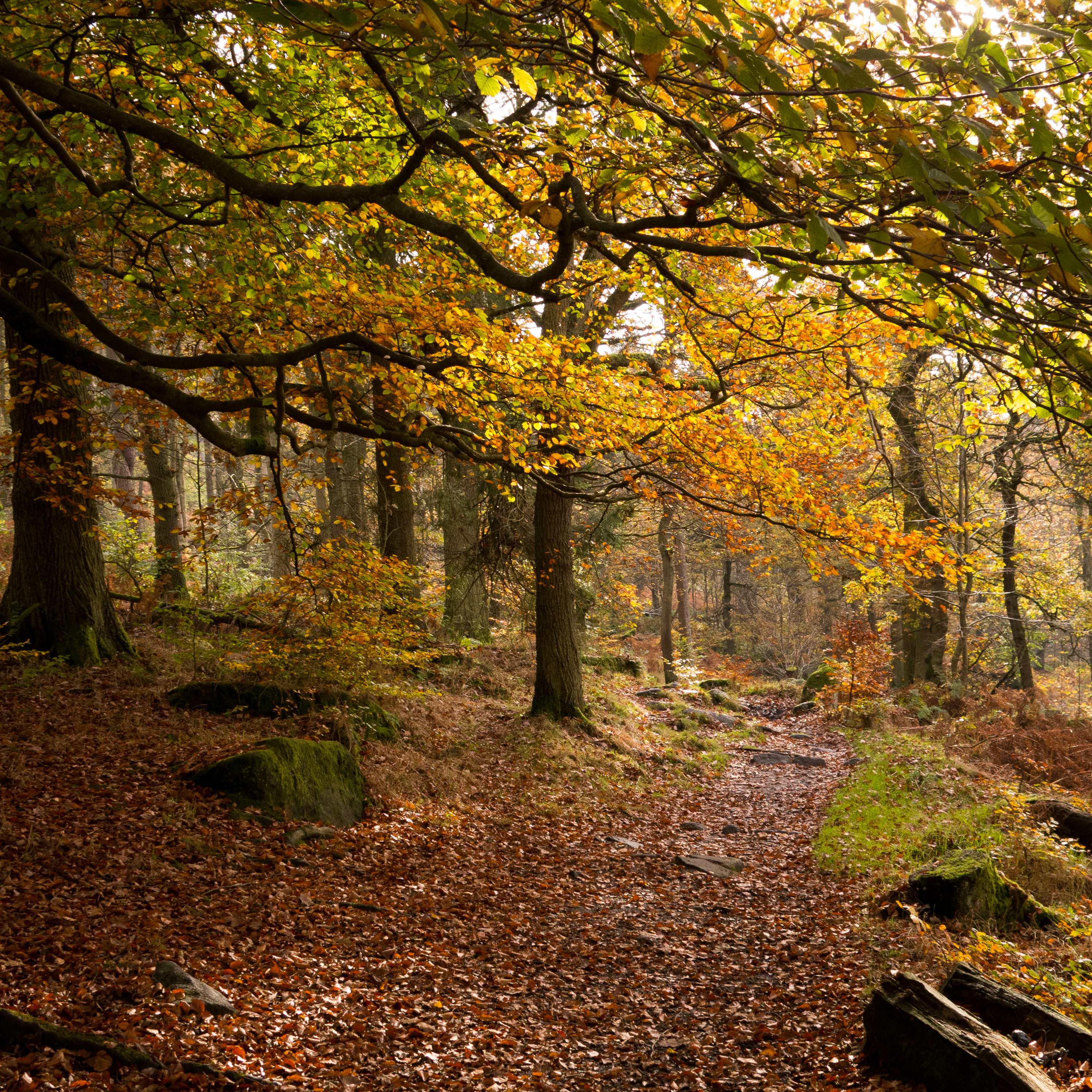 Padley Gorge 2 of 4