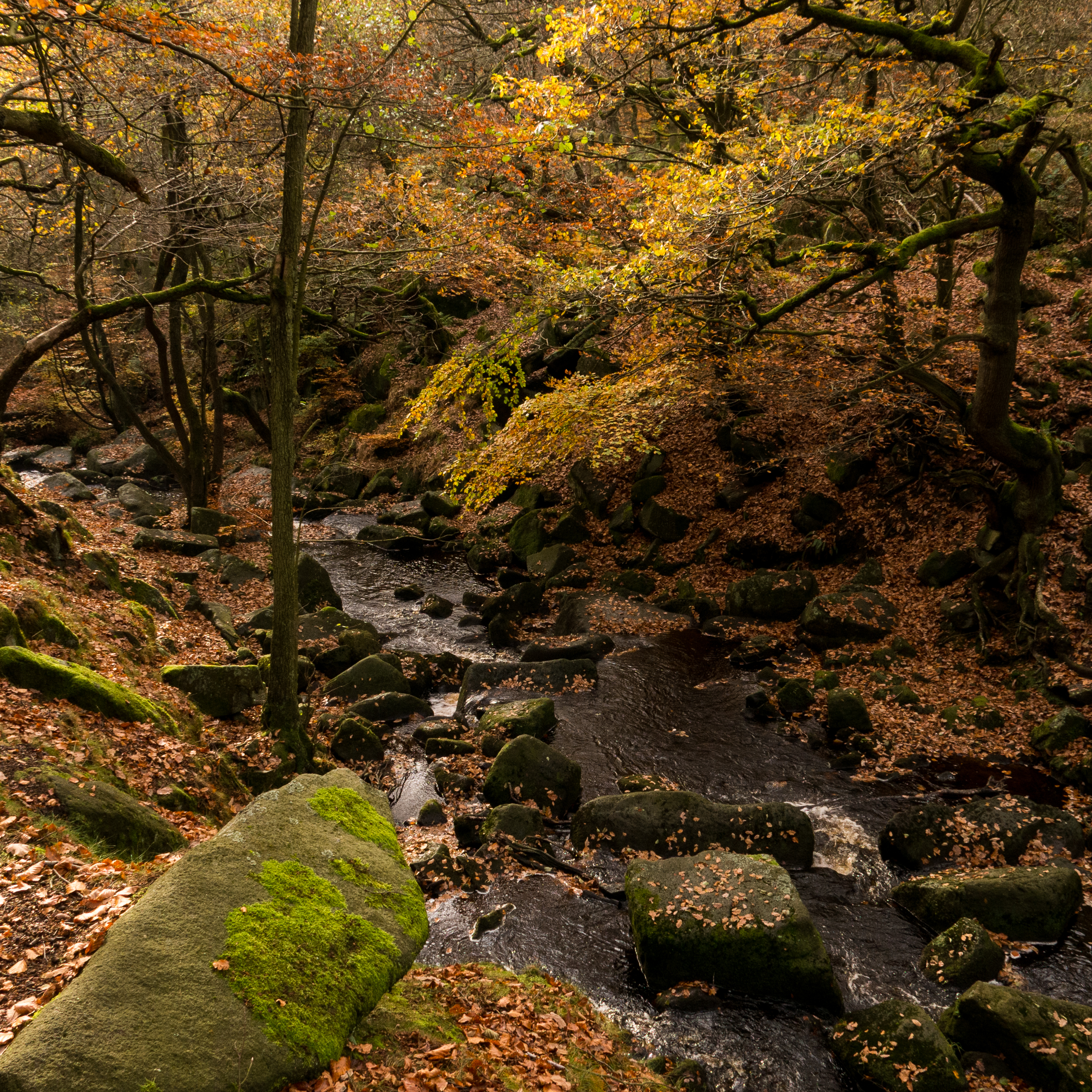 Padley Gorge 1 of 4
