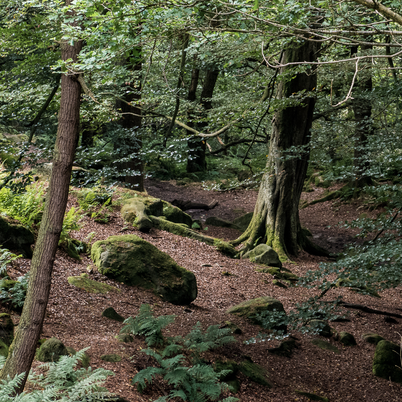 Padley Gorge Light