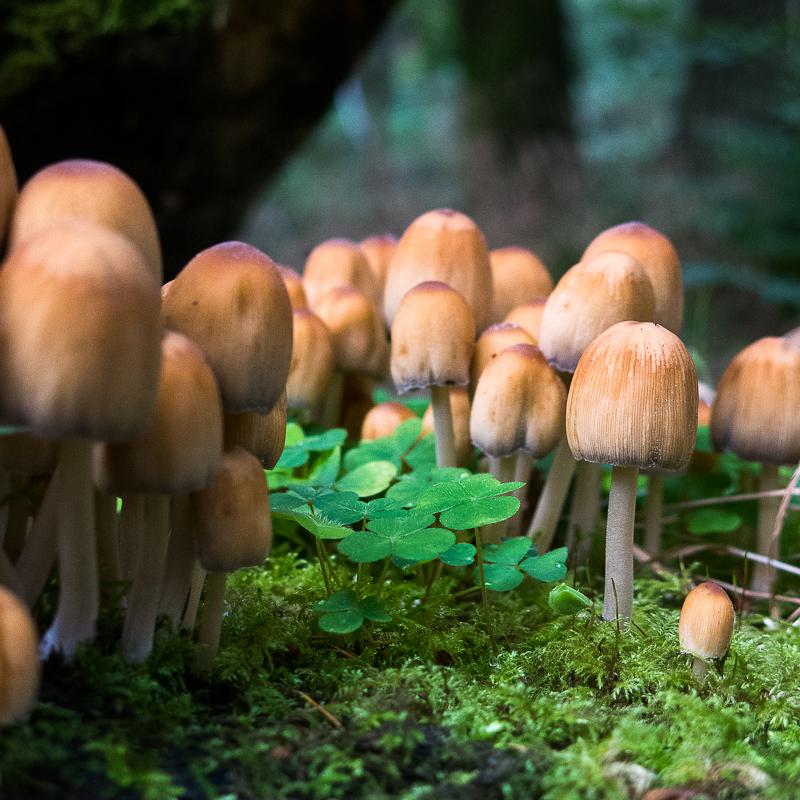 Padley Gorge Fungi