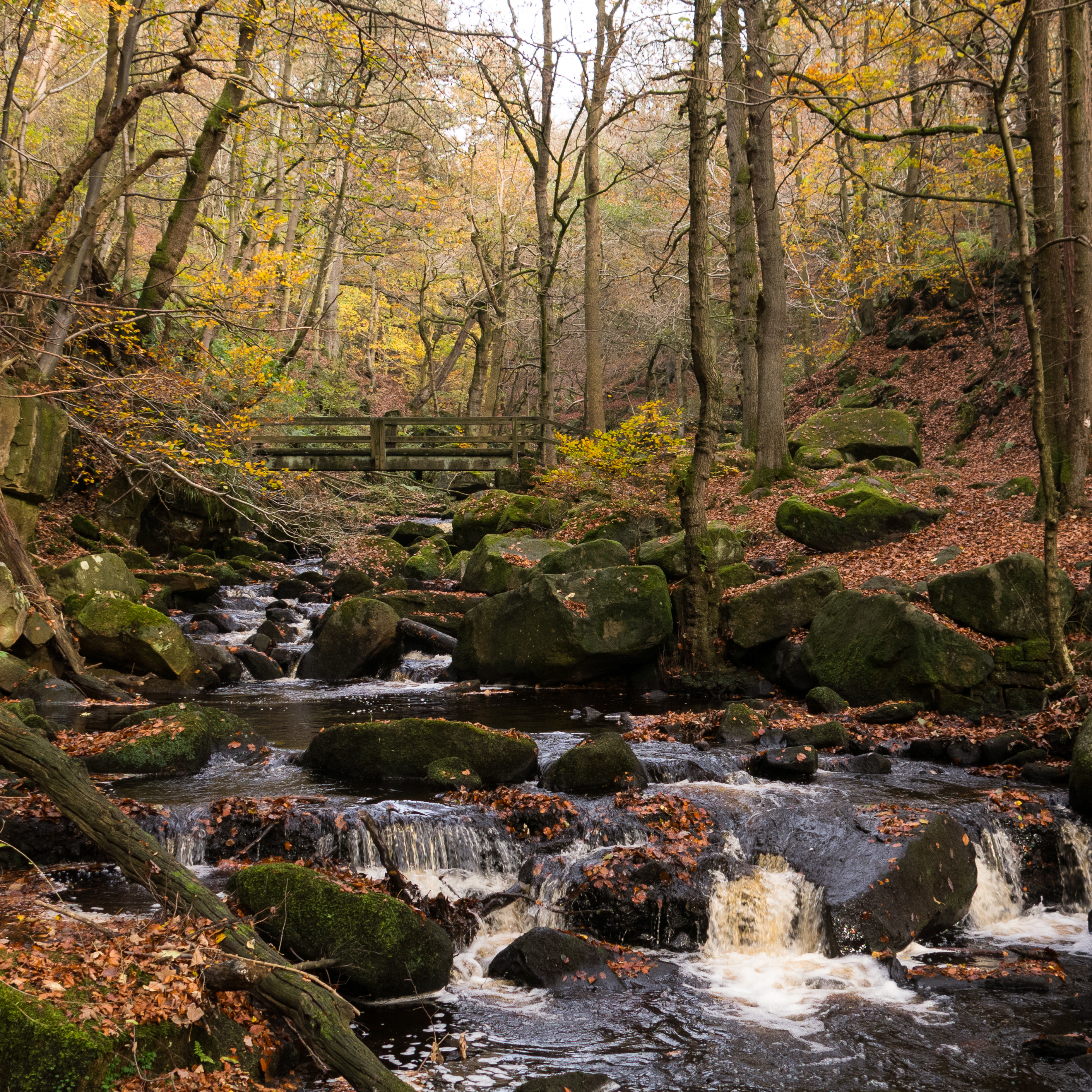 Padley Gorge 3 of 4